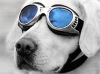 hundebrille